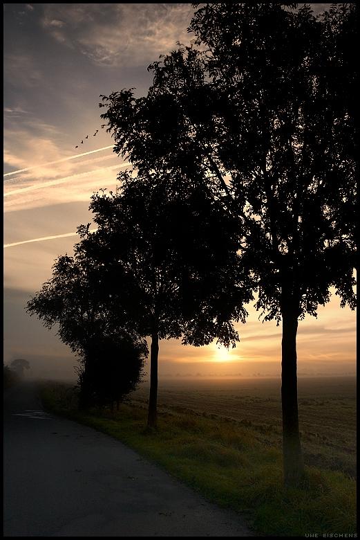 20071020111617_trees.jpg