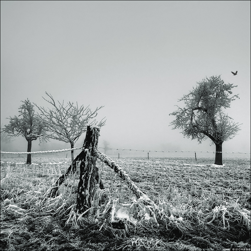 Winter-withered