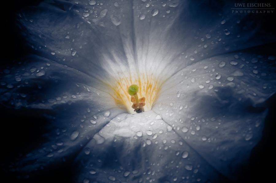 20090811112227_rain_on_petunia.jpg