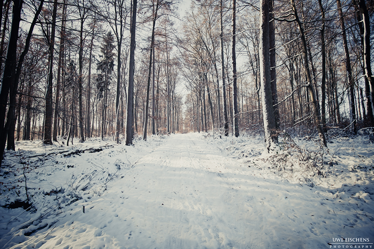 WinterForest4